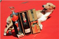 Lemon_Moet_&_Chandon_Czech_Greyhound_Racing_IMG_5068.JPG