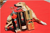 Lemon_Moet_&_Chandon_Czech_Greyhound_Racing_IMG_5071.JPG