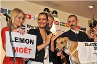 Lemon_Moet_Miss_CR_Jitka_Valkova_Golden_Greyhound_2010_Awards_269.jpg