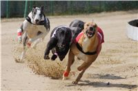 Winner_Lemon_Moet_April_Cup_12_Czech_Greyhound_Racing_Federation_DSC07819.JPG