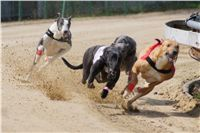 Winner_Lemon_Moet_April_Cup_12_Czech_Greyhound_Racing_Federation_DSC07821.JPG