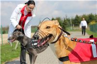 Winner_Lemon_Moet_April_Cup_12_Czech_Greyhound_Racing_Federation_IMG_4408.JPG