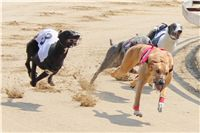 Winner_Lemon_Moet_April_Cup_12_Czech_Greyhound_Racing_Federation_IMG_4438.JPG