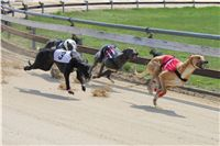 Winner_Lemon_Moet_April_Cup_12_Czech_Greyhound_Racing_Federation_IMG_4439.JPG