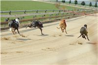 Winner_Lemon_Moet_April_Cup_12_Czech_Greyhound_Racing_Federation_IMG_4441.JPG