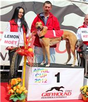 Winner_Lemon_Moet_April_Cup_12_Czech_Greyhound_Racing_Federation_IMG_4468.JPG