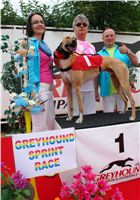 Winner_Lemon_Moet_Czech_Greyhound_Racing_Federation_DSC06887.JPG