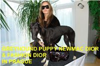 Winner_NewMac_DIOR_Czech_Greyhound_Racing_Federation_DSC09113.JPG