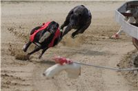 Winner_NewMac_Dior_Czech_Greyhound_Racing_Federation_DSC07882.JPG