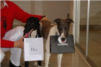 Winner_NewMac_Dior_Czech_Greyhound_Racing_Federation_DSC09170.JPG
