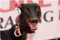 Winner_NewMac_Dior_Czech_Greyhound_Racing_Federation_DSC09471.JPG