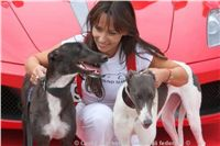 Winner_NewMac_Dior_Czech_Greyhound_Racing_Federation_IMG_0890.jpg