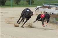 Winner_NewMac_Dior_Czech_Greyhound_Racing_Federation_IMG_4538.JPG