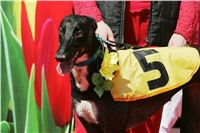 Winner_NewMac_Dior_Czech_Greyhound_Racing_Federation_Nq1m2933.jpg