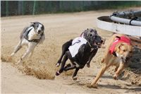 Chti_dostihy_April_Cup_2012_Czech_Greyhound_Racing_Federation_DSC07822.JPG