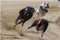 Chti_dostihy_April_Cup_2012_Czech_Greyhound_Racing_Federation_DSC07885.JPG