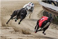 Chti_dostihy_April_Cup_2012_Czech_Greyhound_Racing_Federation_DSC07886.JPG