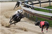 Chti_dostihy_April_Cup_2012_Czech_Greyhound_Racing_Federation_DSC07887.JPG