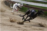 Chti_dostihy_April_Cup_2012_Czech_Greyhound_Racing_Federation_DSC07889.JPG