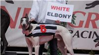 Chti_dostihy_April_Cup_2012_Czech_Greyhound_Racing_Federation_DSC07916.JPG