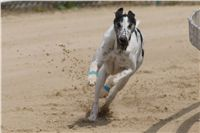 Chti_dostihy_April_Cup_2012_Czech_Greyhound_Racing_Federation_DSC07928.JPG