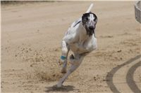 Chti_dostihy_April_Cup_2012_Czech_Greyhound_Racing_Federation_DSC07930.JPG