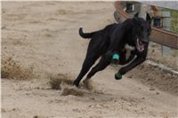 Chti_dostihy_April_Cup_2012_Czech_Greyhound_Racing_Federation_DSC07945.JPG
