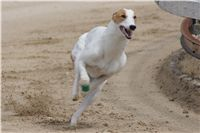 Chti_dostihy_April_Cup_2012_Czech_Greyhound_Racing_Federation_DSC07986.JPG