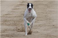 Chti_dostihy_April_Cup_2012_Czech_Greyhound_Racing_Federation_DSC08011.JPG