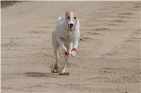 Chti_dostihy_April_Cup_2012_Czech_Greyhound_Racing_Federation_DSC08036.JPG