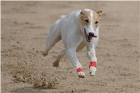 Chti_dostihy_April_Cup_2012_Czech_Greyhound_Racing_Federation_DSC08043.jpg