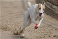 Chti_dostihy_April_Cup_2012_Czech_Greyhound_Racing_Federation_DSC08045.JPG