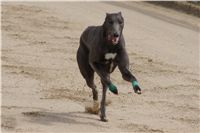 Chti_dostihy_April_Cup_2012_Czech_Greyhound_Racing_Federation_DSC08058.JPG