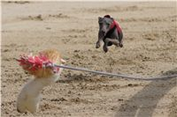 Chti_dostihy_April_Cup_2012_Czech_Greyhound_Racing_Federation_DSC08062.JPG
