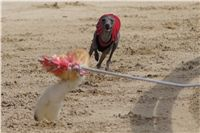 Chti_dostihy_April_Cup_2012_Czech_Greyhound_Racing_Federation_DSC08063.JPG