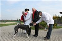 Chti_dostihy_April_Cup_2012_Czech_Greyhound_Racing_Federation_IMG_4279.JPG