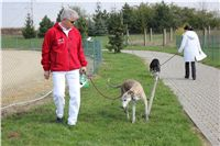 Chti_dostihy_April_Cup_2012_Czech_Greyhound_Racing_Federation_IMG_4282.JPG