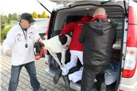 Chti_dostihy_April_Cup_2012_Czech_Greyhound_Racing_Federation_IMG_4322.JPG