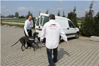 Chti_dostihy_April_Cup_2012_Czech_Greyhound_Racing_Federation_IMG_4341.JPG