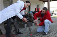 Chti_dostihy_April_Cup_2012_Czech_Greyhound_Racing_Federation_IMG_4400.JPG