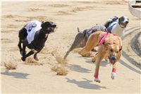 Chti_dostihy_April_Cup_2012_Czech_Greyhound_Racing_Federation_IMG_4438.JPG