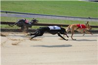 Chti_dostihy_April_Cup_2012_Czech_Greyhound_Racing_Federation_IMG_4440.JPG