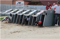 Chti_dostihy_April_Cup_2012_Czech_Greyhound_Racing_Federation_IMG_4531.JPG