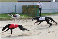 Chti_dostihy_April_Cup_2012_Czech_Greyhound_Racing_Federation_IMG_4533.JPG