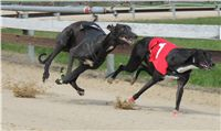 Chti_dostihy_April_Cup_2012_Czech_Greyhound_Racing_Federation_IMG_4539.JPG