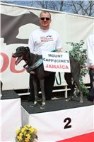Chti_dostihy_April_Cup_2012_Czech_Greyhound_Racing_Federation_IMG_4564.JPG