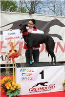 Chti_dostihy_April_Cup_2012_Czech_Greyhound_Racing_Federation_IMG_4591.JPG