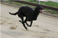 Chti_dostihy_April_Cup_2012_Czech_Greyhound_Racing_Federation_IMG_4611.JPG