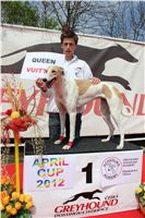 Chti_dostihy_April_Cup_2012_Czech_Greyhound_Racing_Federation_IMG_4645.JPG