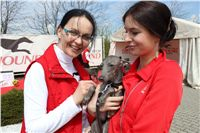 Chti_dostihy_April_Cup_2012_Czech_Greyhound_Racing_Federation_IMG_4686.jpg